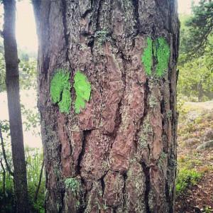 Gröna spåret, Nackareservatet
