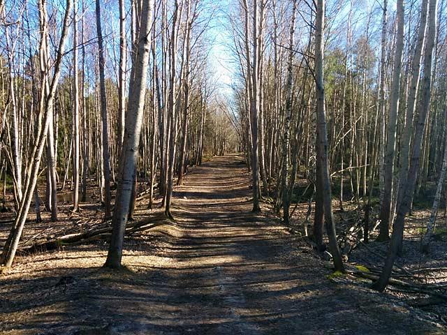 Vår i Majroskogen