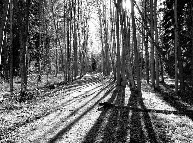 Skog i motljus