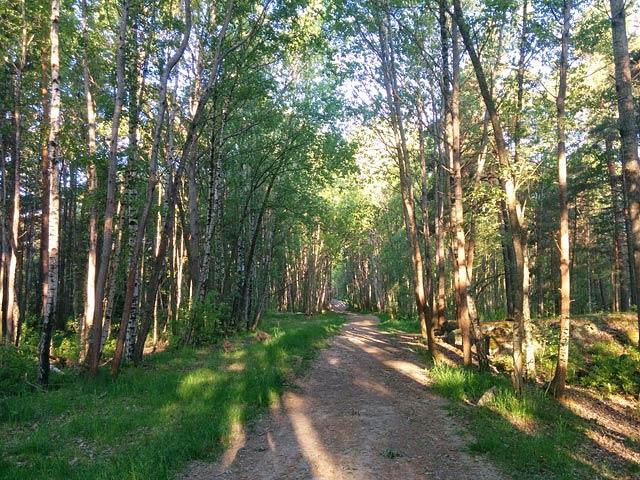 Majroskogen, före