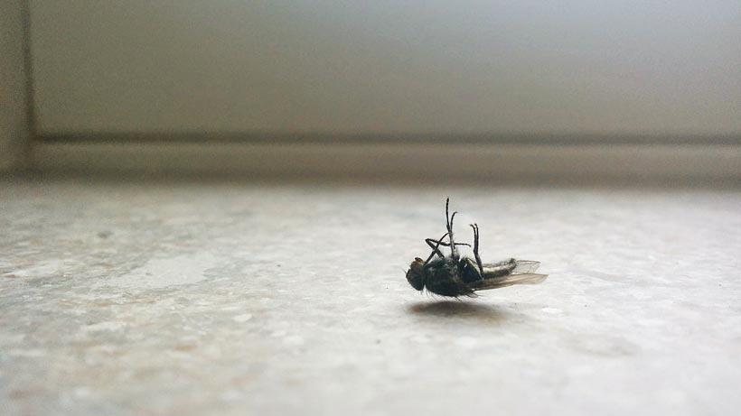 Vilande fluga